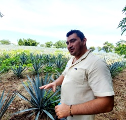 Antonio in the Alborada agave field